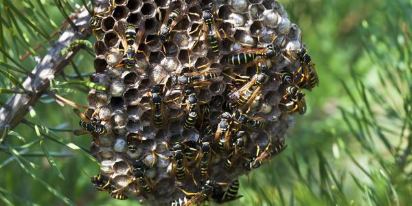 disinfestazione insetti volanti e striscianti