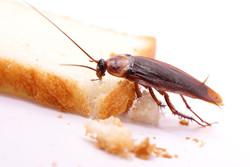 disinfestazione contro insetti striscianti