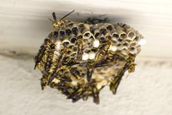disinfestazione contro insetti volanti