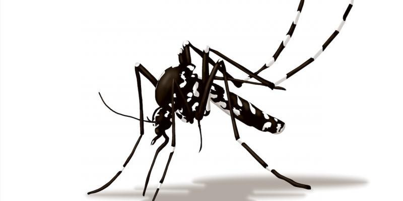infestazione zanzara tigre