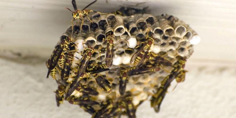 sanzioni in germania a chi uccide insetti