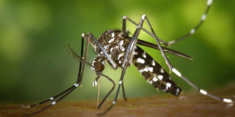 metodo biotecnologico contro la zanzara tigre