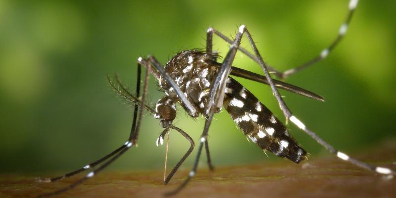 guerra biologica zanzara tigre