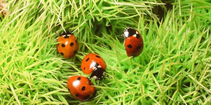 problema ecosistema insetti non infestanti