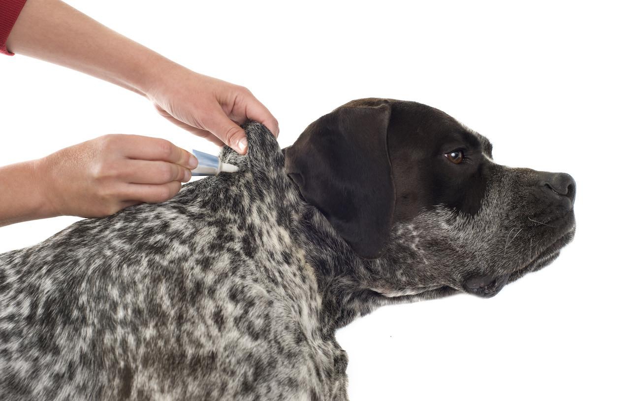 parassiti animali domestici