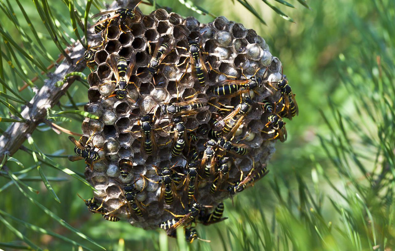 tecnologia applicata agli insetti