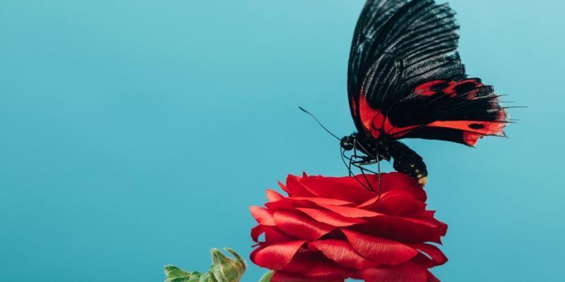 moria degli insetti