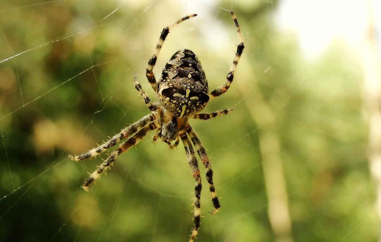 abitudini alimentari ragni