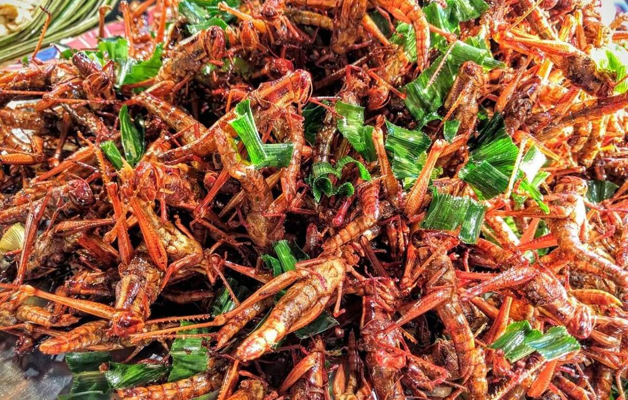 insetti e grilli nel menu