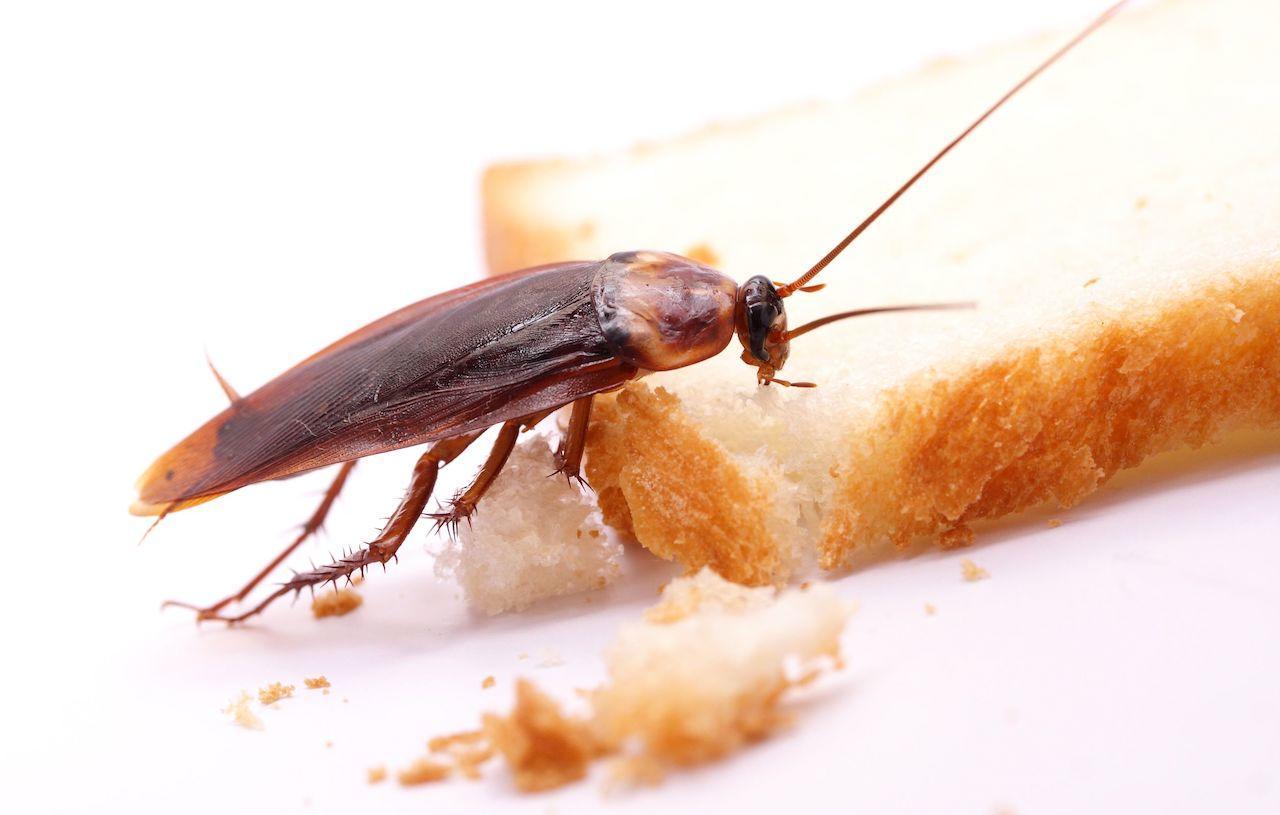 presenza insetti mense scolastiche
