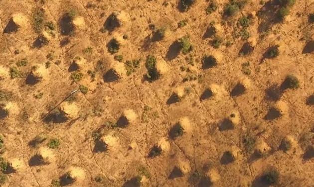 termitaio più grande del mondo