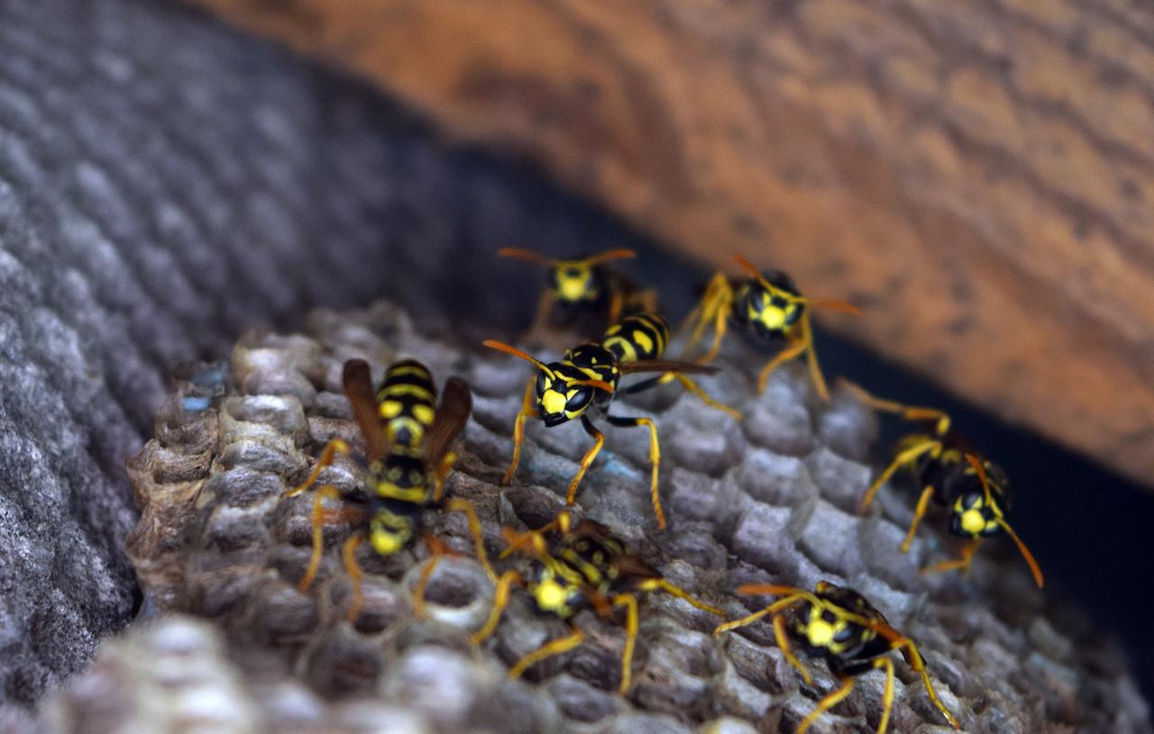 proteggersi da vespe e calabroni