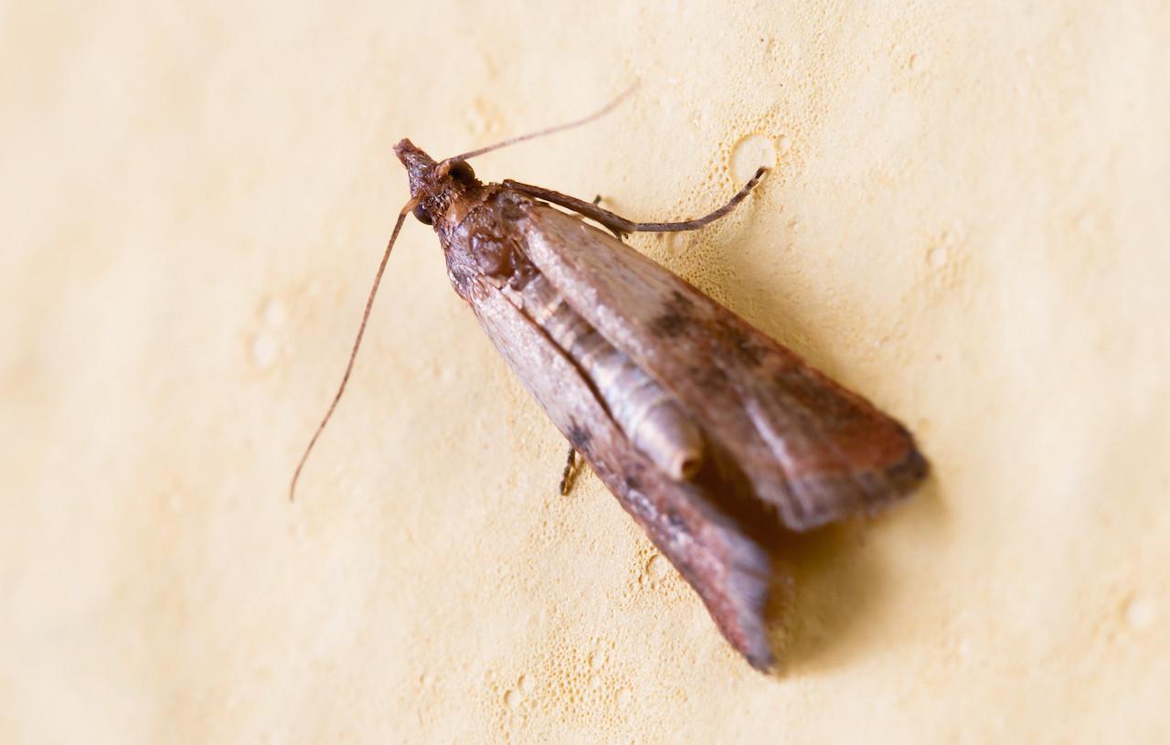 pericolo diminuzione insetti