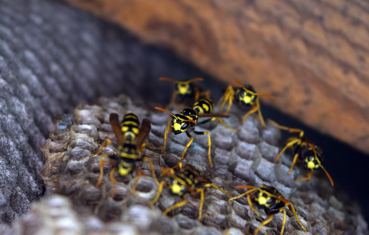 insetti primaverili
