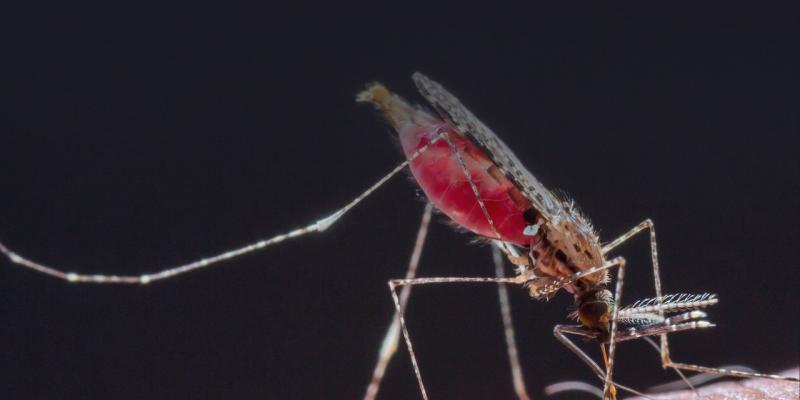 invasione zanzare