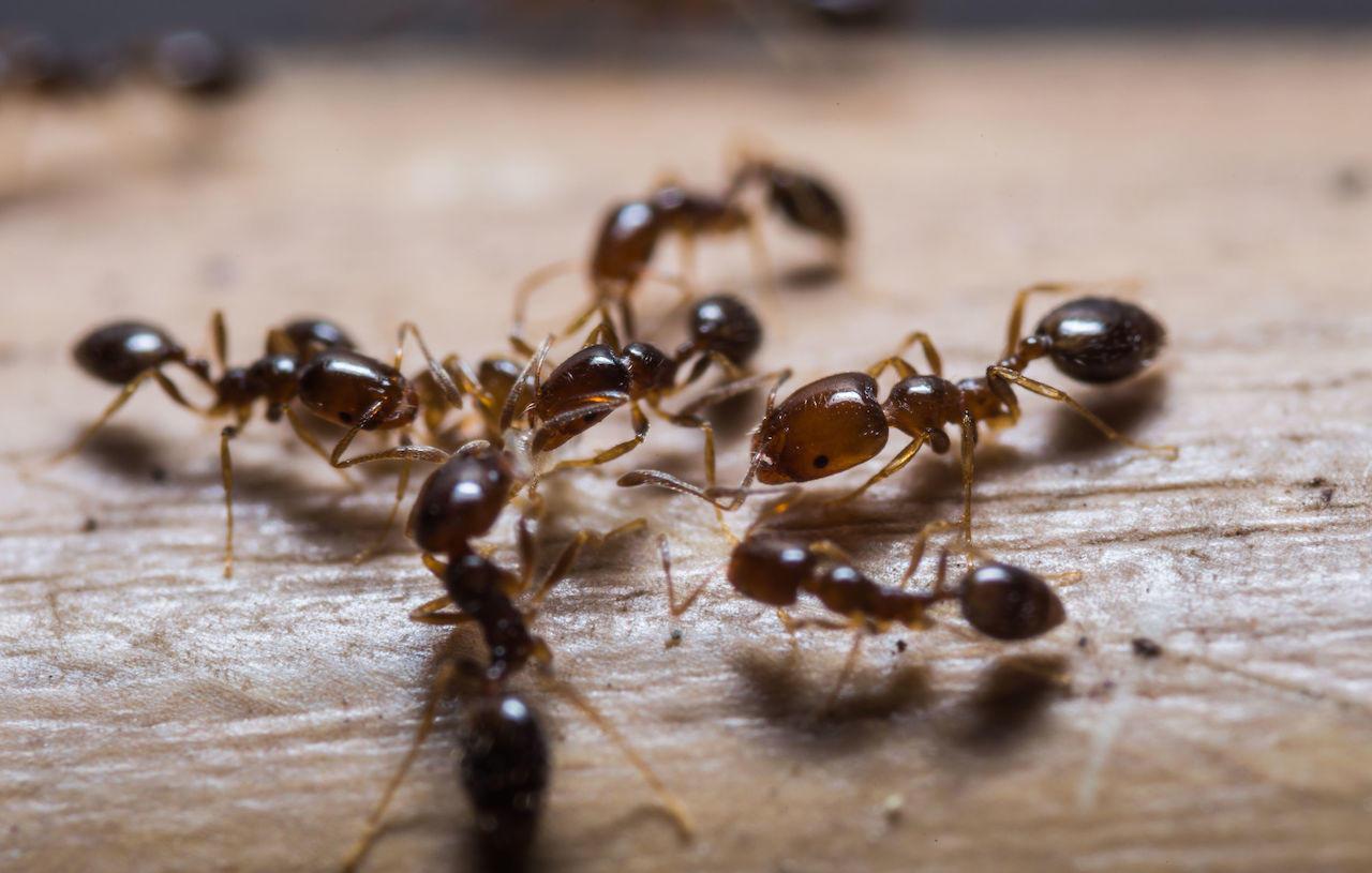 disinfestazione estiva insetti