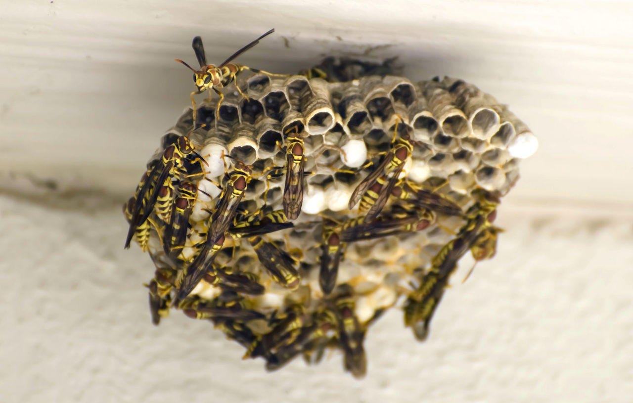 proteggere frutteti da insetti