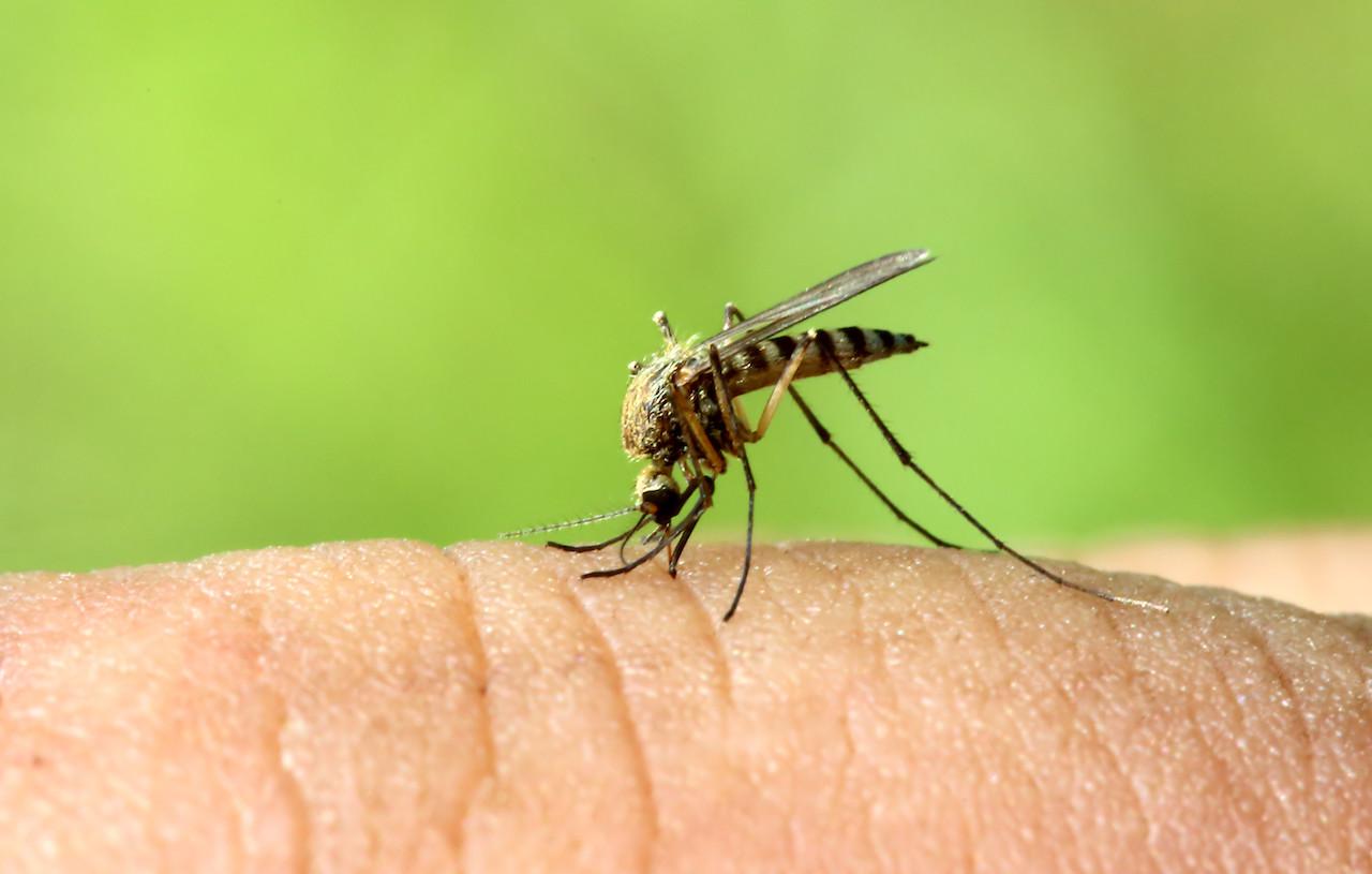 evitare punture di zanzare