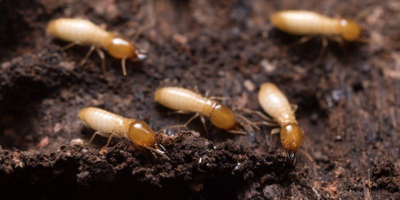 danni provocati da termiti