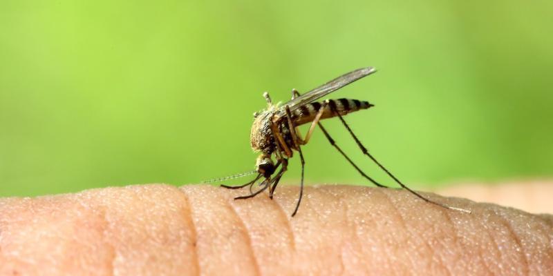 arrivano le zanzare
