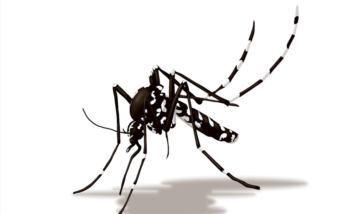 lotta biologica zanzara tigre
