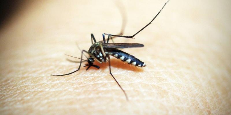 punture zanzara