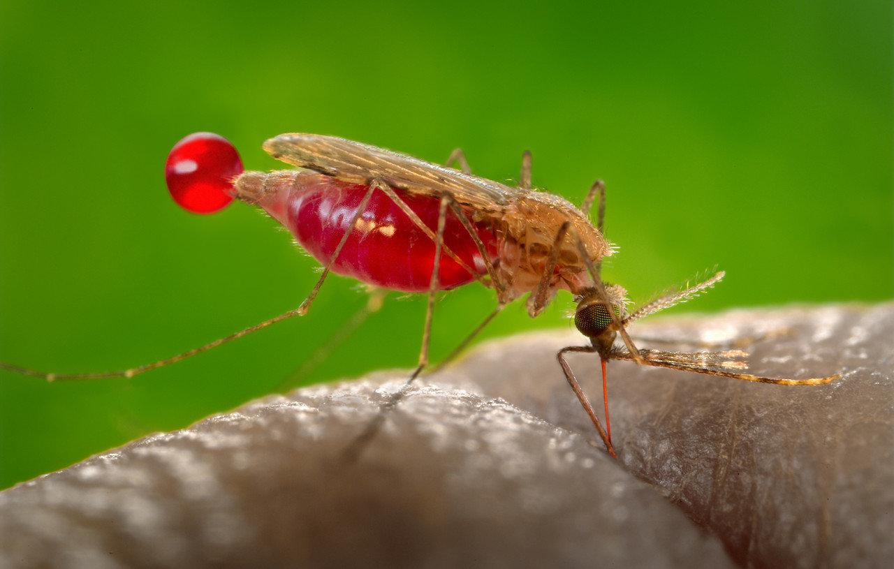 zanzare e malattie virali