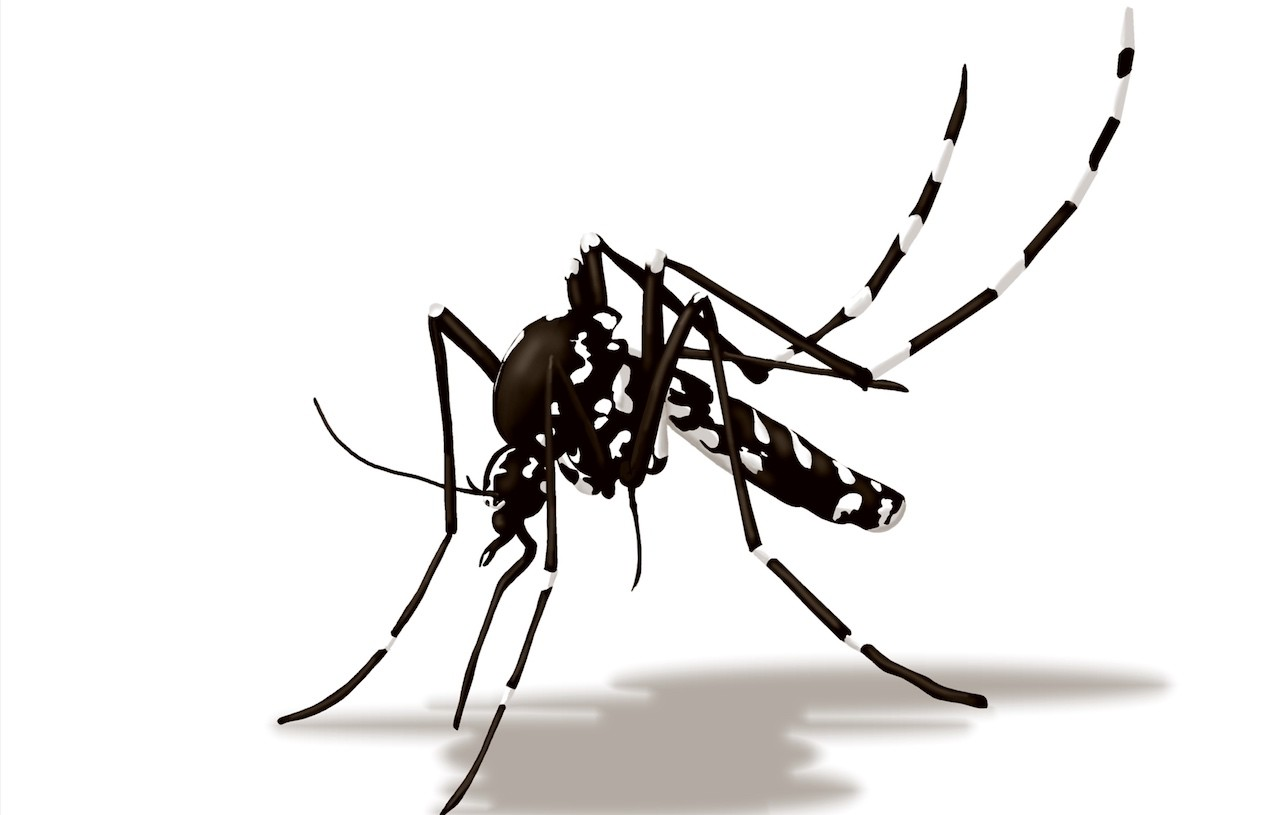 infezione da zanzara tigre
