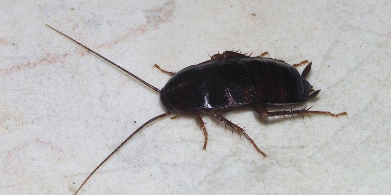 allontanamento scarafaggi