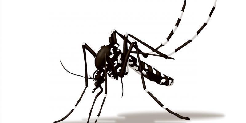 eliminazione zanzara tigre