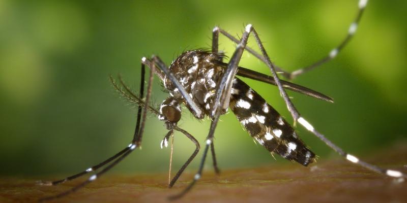 zanzara tigre rimedi naturali