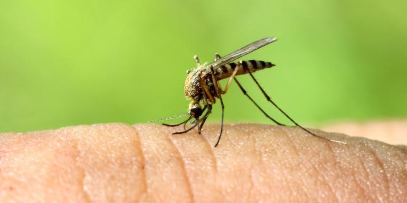 come le zanzare scelgono le loro vittime