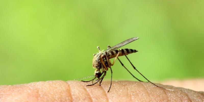 zanzare virus mortale