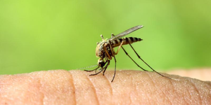 liberarsi dalle zanzare