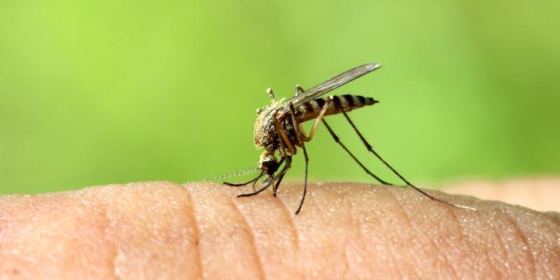 allerta virus zanzare