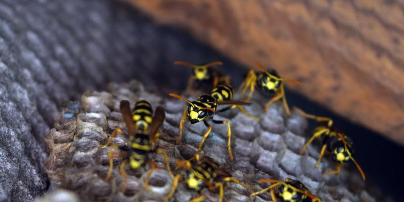 sparizione insetti