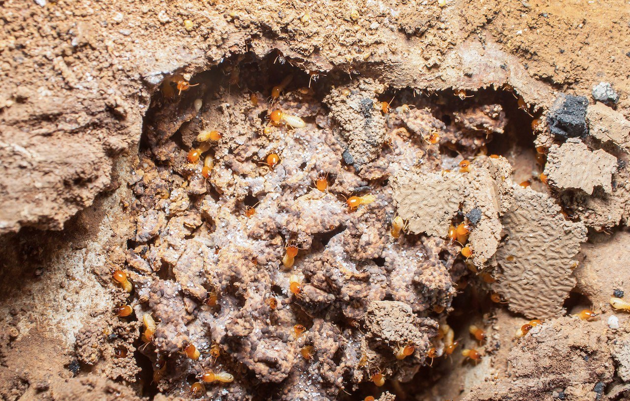 insetti letali