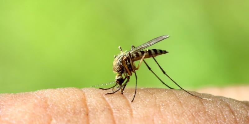 zanzare percepiscono insetticidi