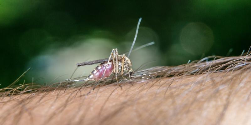 difendersi dalle punture di zanzare