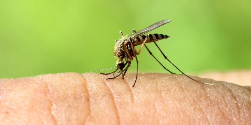 i droni come soluzione al problema delle zanzare
