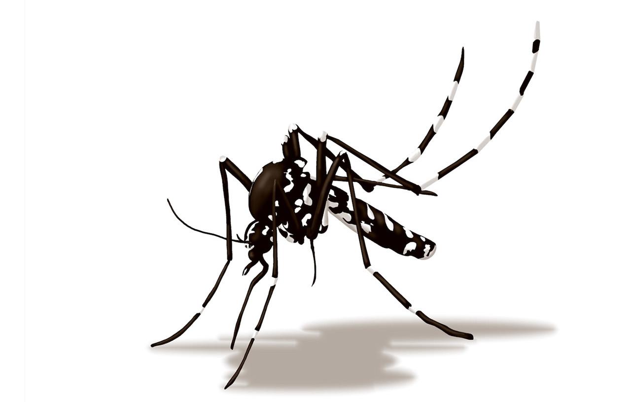 tenere lontana la zanzara tigre