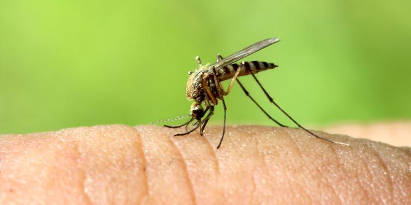 come le zanzare hanno iniziato a morderci
