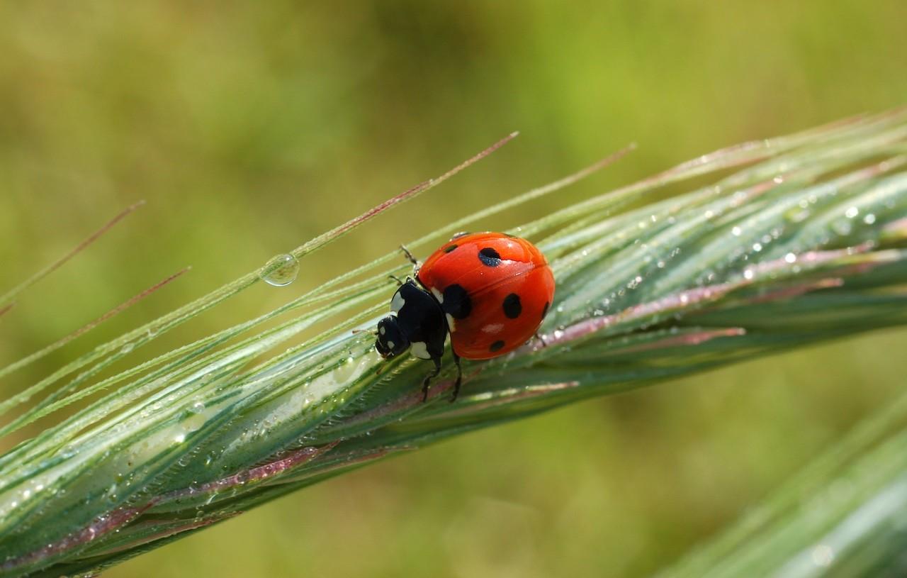 la silenziosa strage degli insetti
