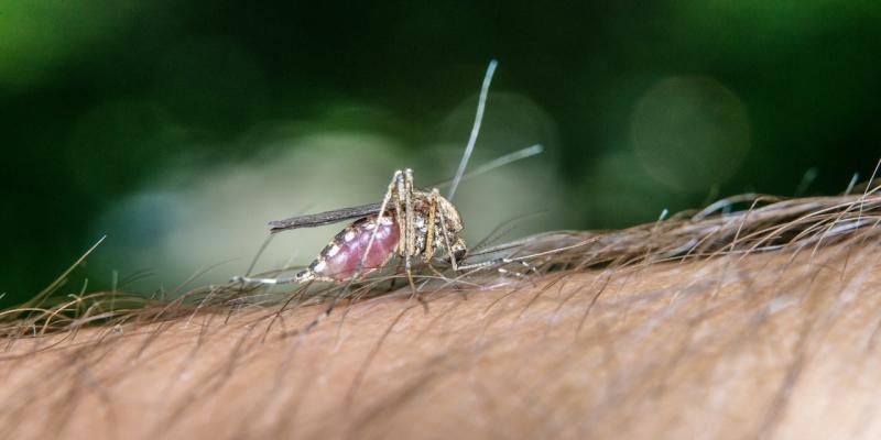 zanzare pungono con luce artificiale