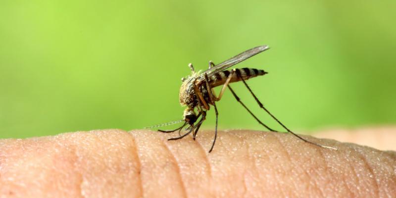 comprendere come ci annusano le zanzare