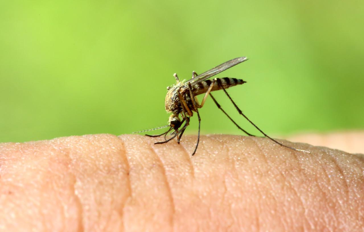 le zanzare pungono anche d'inverno