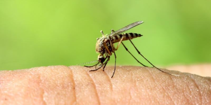 le zanzare un rischio per la salute