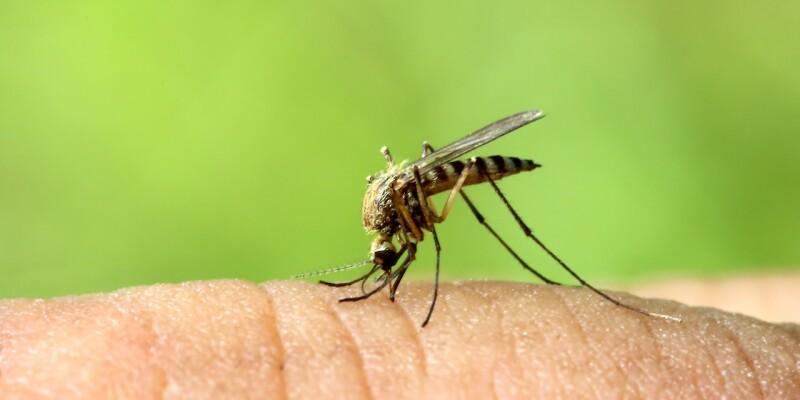 le zanzare possono salvarci