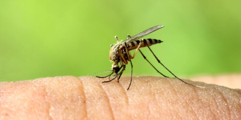 rimedi e odori per allontanare zanzare