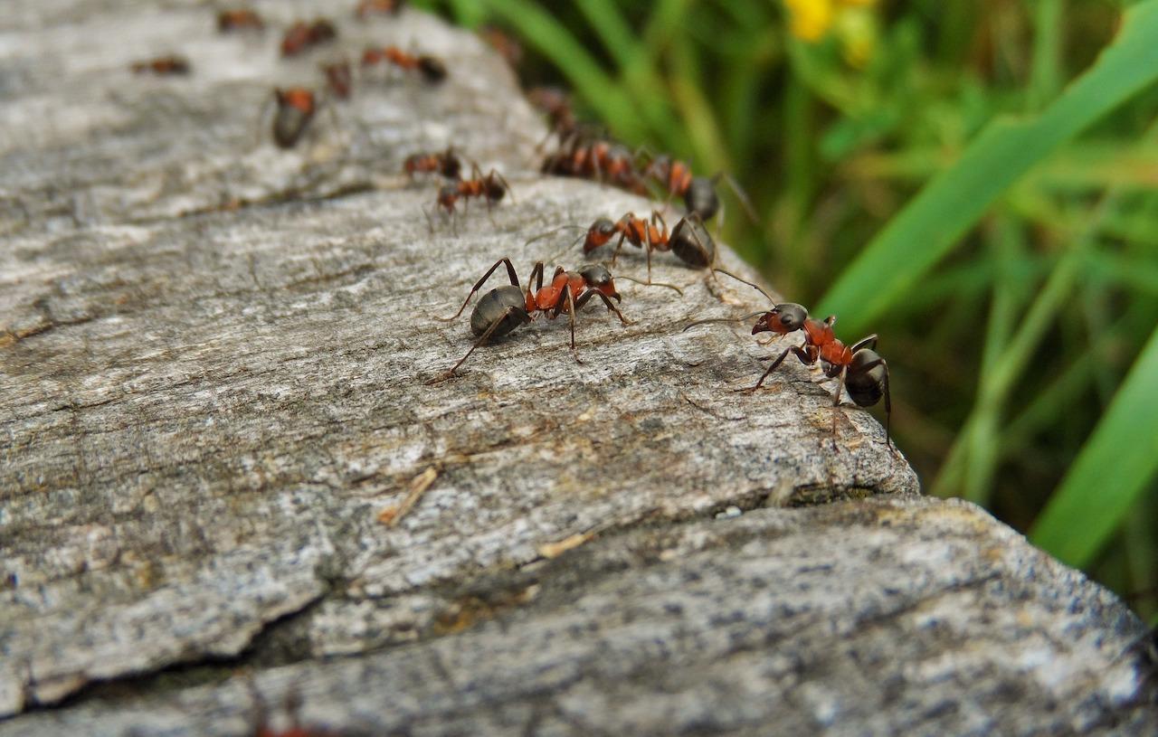 allontanare le formiche dalla propria abitazione